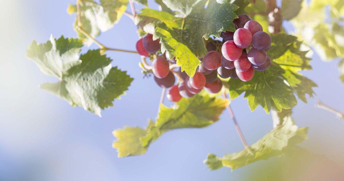 ISNED - Genieß die Früchte